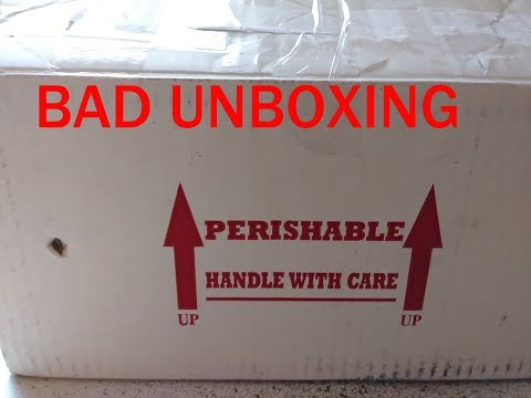 UNBOXING BALL PYTHONS - NOT HAPPY
