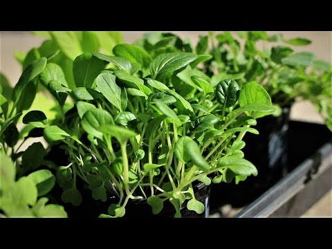 Green Thumb Festival: Use fertilizer in container vegetable gardening