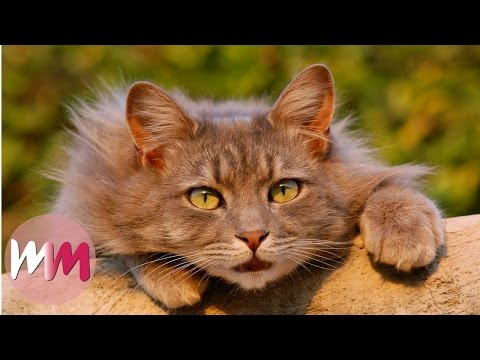 Top 10 Funny Tricks to Teach Your Cat