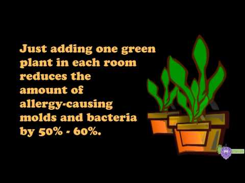 Quick Tip #1 - Get Rid Of Dust & Mold ALLERGIES Indoors - with Plants!