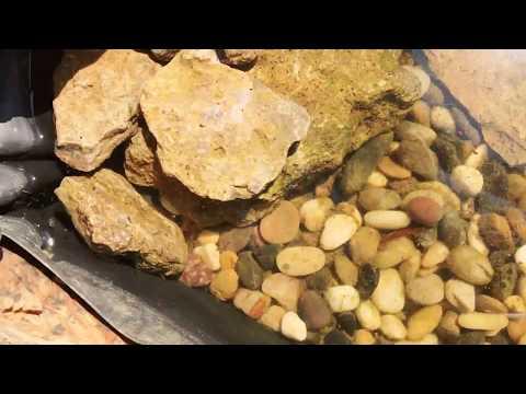 My outdoor box turtle habitat