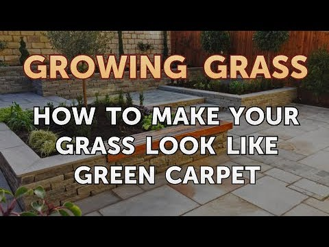How to Make Your Grass Look Like Green Carpet