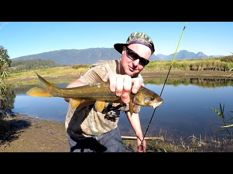 I Found What Works.  Fishing for Northern Pikeminnow.