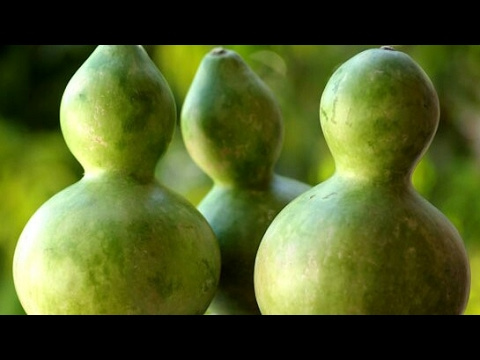 How to Grow Gourds -Part 1-