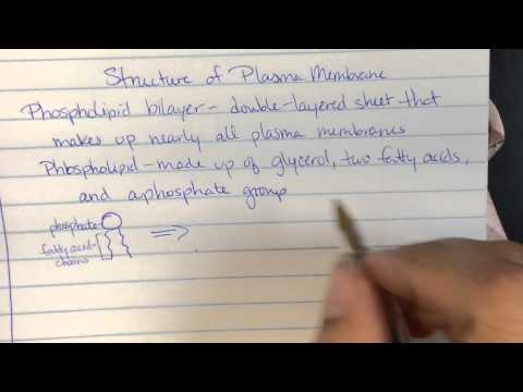 Plasma Membrane Notes