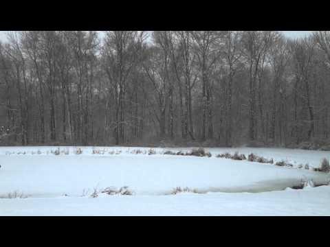 20140203-pond-snow