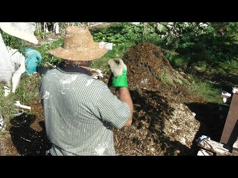 How to build a no smell backyard compost pile using manure!