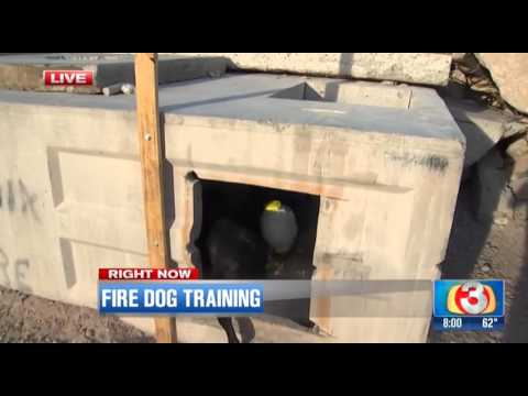 54722 KTVK 2016 03 03 0808 Arizona Search Dogs Training 03m55s 1