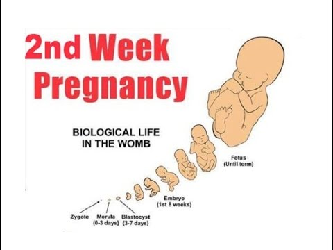 2 weeks pregnant symptoms and signs