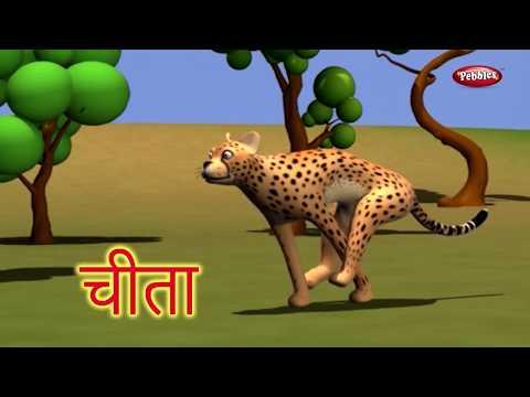 Animal Facts in Hindi | Cheetah Facts Hindi | Cheetah Essay in Hindi | Cheetah Song | Cheetah Story