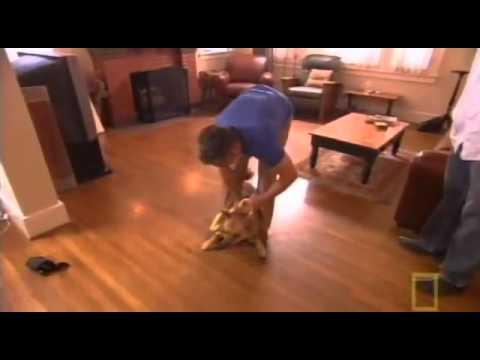Taming a Wild Dog