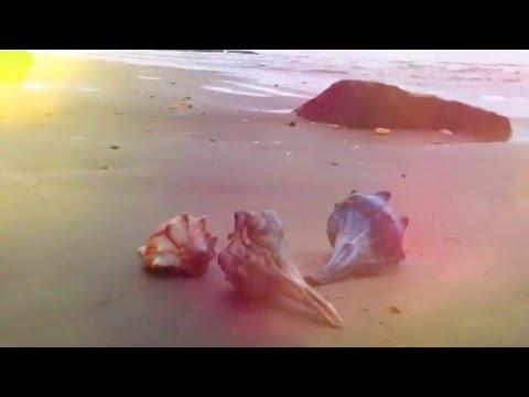 Sea Shells #1