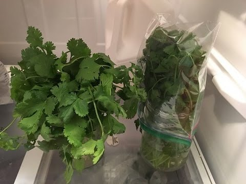How to store Cilantro/Coriander leaves for 2 to 3 weeks