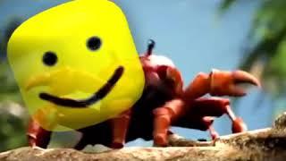 roblox crab rave Videos - 9tube tv