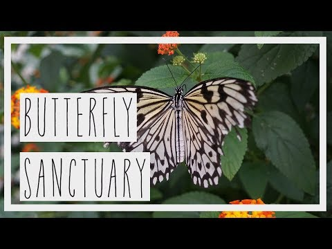 BUTTERFLY SANCTUARY - Montreal