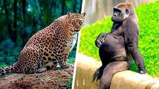 """#x202b;هل سبق ورأيت تلك الحيوانات وهى فى فترة الحمل؟! """"حقائق مذهلة """".. !!😱#x202c;lrm;"""