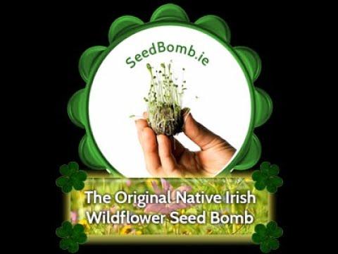 How Wildflower Seed Bombs Work in Ireland