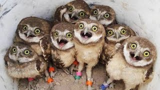 Funny Owls And Cute Owl Videos Compilation 2016