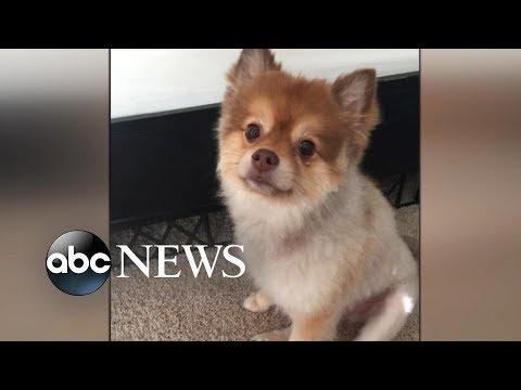 8-year-old Pomeranian dog dies aboard Delta flight