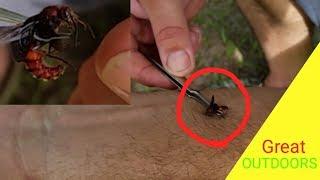 Download FLYING COW KILLER STING TEST. The Velvet Ant. Video