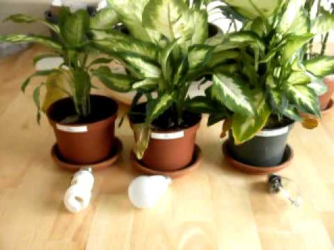 Artificial Lighting Products Plant Growth Experiment Results