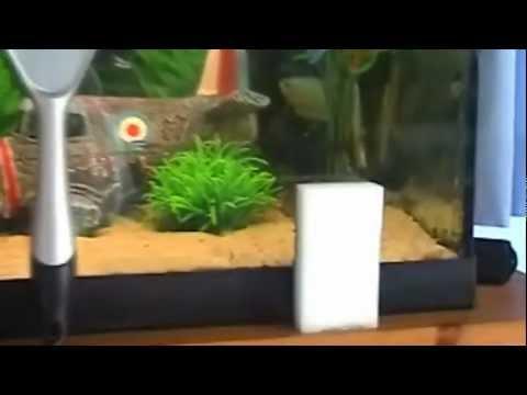 Tutorial: How to clean your aquarium glass!