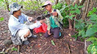 The Best Birds Trap In Cambodia    Wild Chicken Trap    The Best Bird Trap (Chicken)