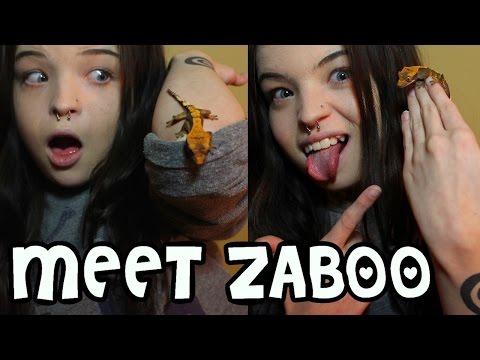 MEET ZABOO; MY BABY CRESTED GECKO