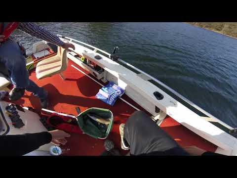 44cm Brown Trout At Lake Lyell
