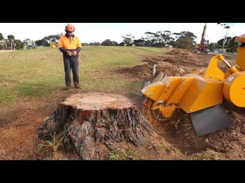 Tree Stump Removal remove a tree stump