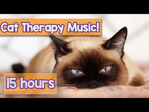 Relaxing Cat Music for Anxious Cats! Calm Your Cat with this Natural Anxiety Remedy for Cats! 🐈 💤