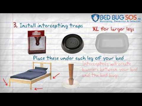 Stop Bed Bug Bites in 5 Steps