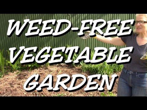 Weed-free Vegetable Garden, easy watering too !