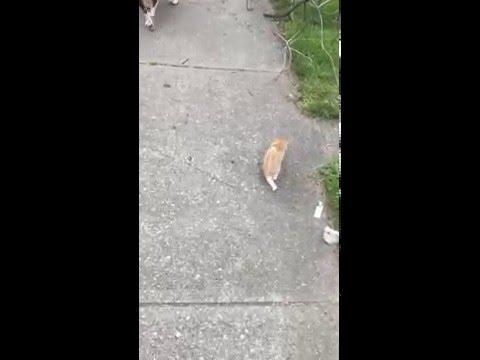 A kitten found us