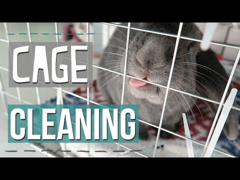 Cleaning The Bunnies Cage