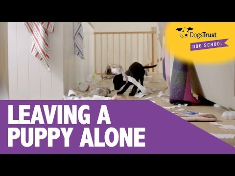 4 Simple Tips to Keep Your Puppy Happy When Left Alone - Dogs Trust Dog School