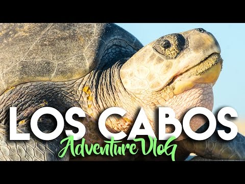 EXPLORING NATURE IN LOS CABOS MEXICO WITH CAJAFRESCA