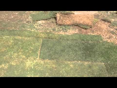 How to lay down install grass sod on your yard DIY