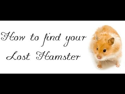 Part 1; How to find your lost hamster