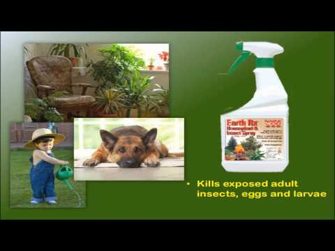 Earl May Garden Center - Houseplant Insecticides