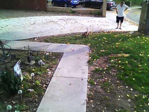 My Neighbor the Douche