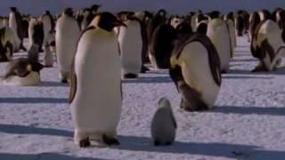Natural World - Bringing Up Baby (2009) (Part 2/6)