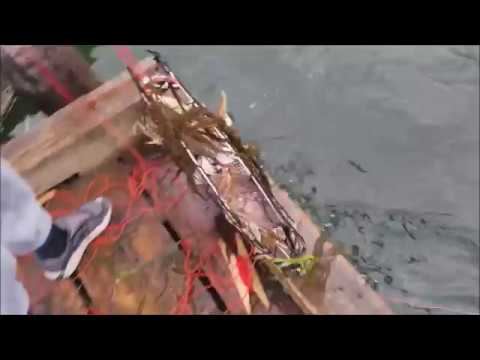 Catch Sea Crab With Net Crab Trap