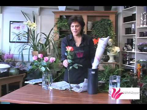 How To Fix A Droopy Rose