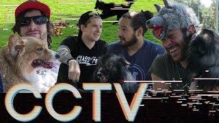 HERMON PARK DOG PICNIC • CCTV #7