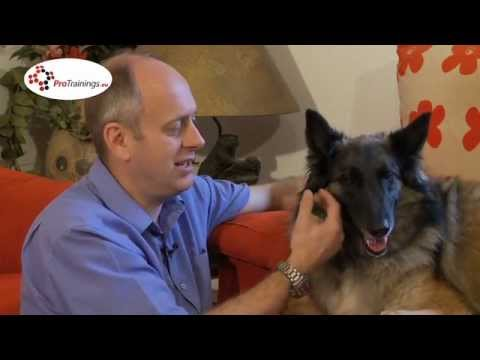 Breathing & Respiratory problems in pets