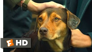 A Dog's Way Home (2018) - Standing Up to the Dogcatcher Scene (10/10)   Movieclips