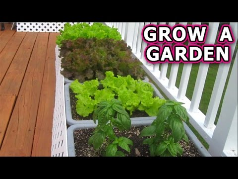 How to Grow a Container Garden from Seeds Vegetable Plant Start Seed Raw Organic Patio Gardening