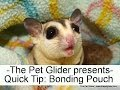 How to Put Sugar Gliders in a Bonding Pouch