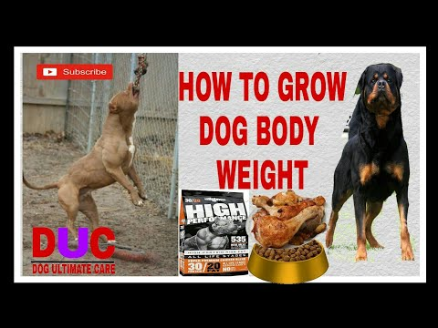 How to grow dog weight !!Dog ultimate care!!